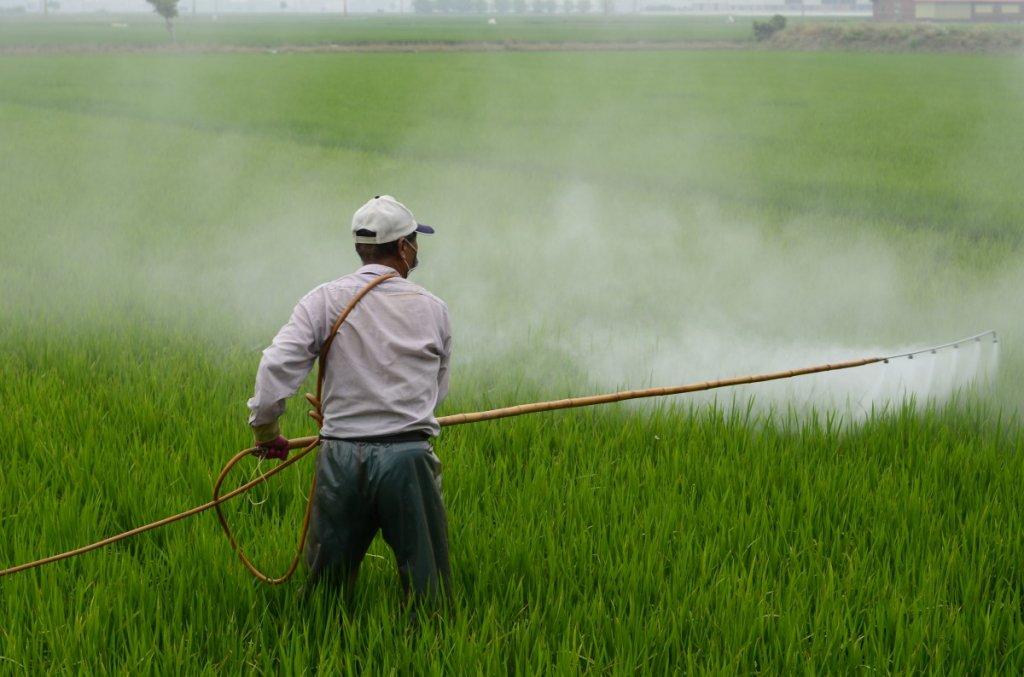 herbicide_avignon_in_rice_field_avignon_a_surname_hiv_pesticide-765968